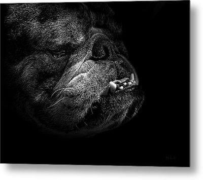Metal Print featuring the photograph Bull Dog by Bob Orsillo
