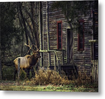 Bull Elk By The Old Boxley Mill Metal Print by Michael Dougherty