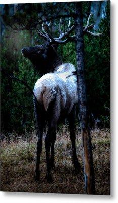 Metal Print featuring the photograph Bull Elk In Moonlight  by Lars Lentz