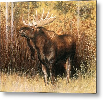 Bull Moose Metal Print by Karen Cade