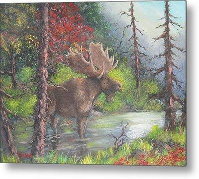 Bull Moose Metal Print by Megan Walsh