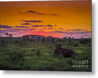 Bull Sunset Metal Print