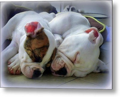 Bulldog Bliss Metal Print