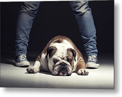 Bulldog Metal Print by Samuel Whitton