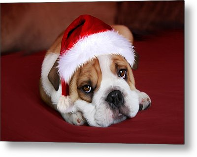 Bully For Santa Metal Print by Julie L Hoddinott