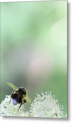 Metal Print featuring the photograph Bumble Bee by Jivko Nakev