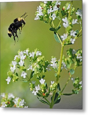Metal Print featuring the photograph Bumble Bee by Kjirsten Collier