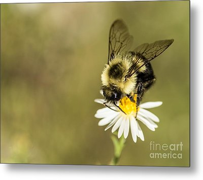 Bumble Bee Macro Metal Print by Debbie Green
