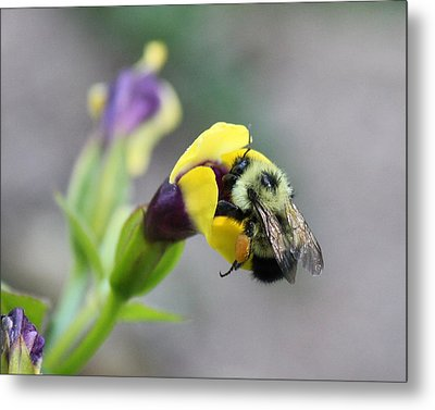 Metal Print featuring the photograph Bumble Bee Making A Wish by Penny Meyers