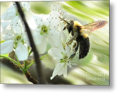 Bumble Bee On Flower Metal Print by Dan Friend