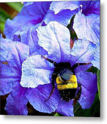 Metal Print featuring the photograph Bumblebee Brunch by Dee Dee  Whittle