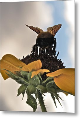 Bumblebee Metal Print by Kim Pippinger