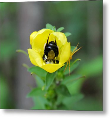Bumblebee Flower Metal Print by Candice Trimble