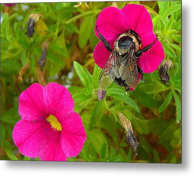 Bumblebee Hug Metal Print by Heidi Manly