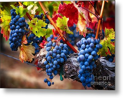 Bunch Of Blue Grapes On The Vine Metal Print by George Oze