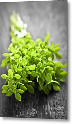 Bunch Of Fresh Oregano Metal Print by Elena Elisseeva