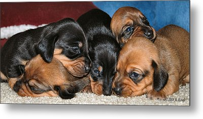 Bunch Of Puppies Metal Print by Anthony Kougl
