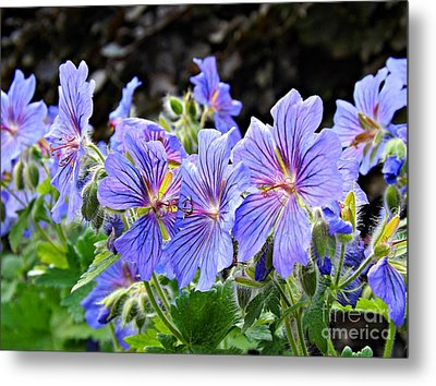 Metal Print featuring the photograph Bunches by Clare Bevan