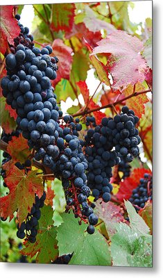 Bunches Of Grapes Metal Print by Jani Freimann