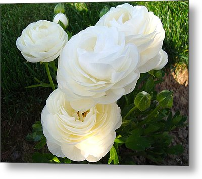 Metal Print featuring the photograph Bundle Of White by Tamara Bettencourt