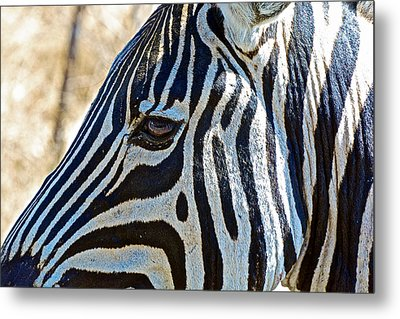 Burchell's Zebra's Face In Kruger National Park-south Africa Metal Print by Ruth Hager