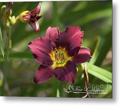 Metal Print featuring the photograph Burgundy Day Lily 20120706_24 by Tina Hopkins