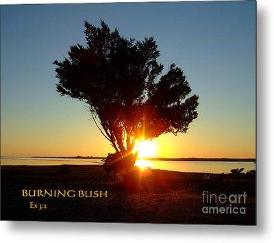 Metal Print featuring the photograph Burning Bush by Bob Sample