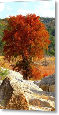 Metal Print featuring the photograph Burning Cypress by David  Norman