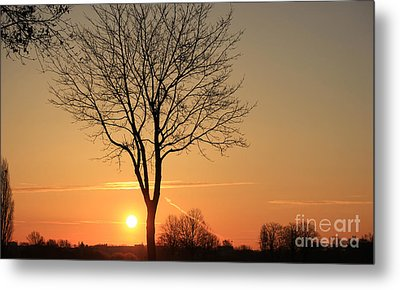 Burning Tree In The Sunrise Metal Print