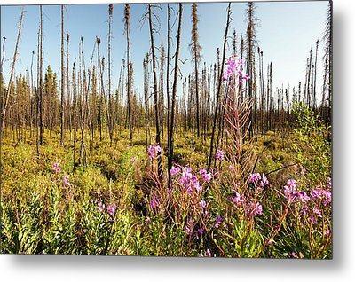 Burnt Forest Metal Print by Ashley Cooper