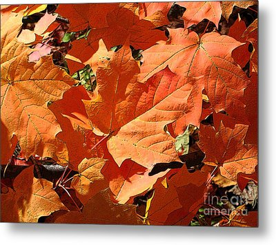 Burnt Orange Metal Print by Ann Horn