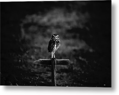 Burrowing Owl At Dusk Metal Print