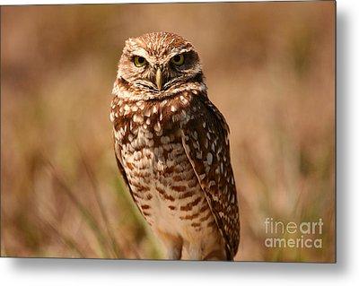 Burrowing Owl Impressions Metal Print
