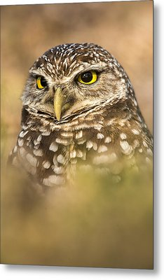 Burrowing Owl Portrait Metal Print