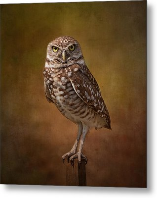 Burrowing Owl Portrait Metal Print by Kim Hojnacki