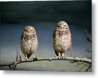 Burrowing Owls Metal Print by Larry Trupp