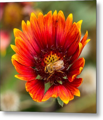 Metal Print featuring the photograph Burst Of Color by Kathleen Scanlan