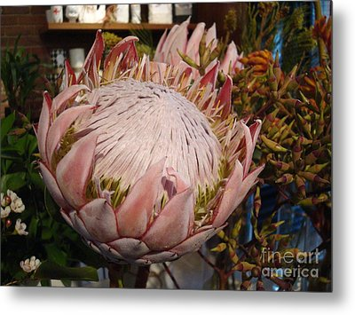 Burst Of Pink  Metal Print by Cathy Dee Janes