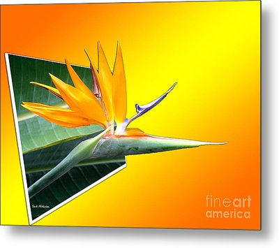 Bursting Out Of The Box Metal Print by Sue Melvin