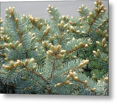 Bush Mountain Crest Metal Print by Christina Verdgeline