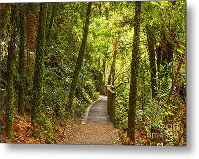 Bush Pathway Waikato New Zealand Metal Print by Colin and Linda McKie