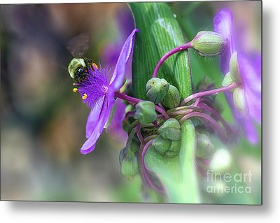 Busy As A Bee Metal Print by Mary Lou Chmura