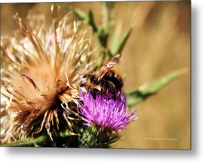 Busy As A... Metal Print by Michele Richter