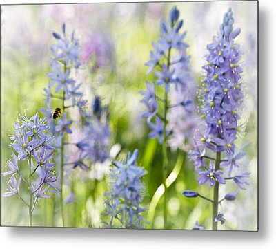 Metal Print featuring the photograph Busy Bee by Annette Hugen