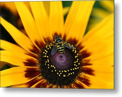 Metal Print featuring the photograph Busy Bee by Denyse Duhaime