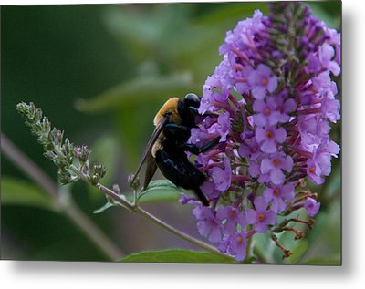 Metal Print featuring the photograph Busy Bee by Greg Graham