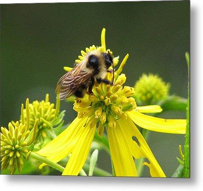 Busy Bee Metal Print by Lynn Berney