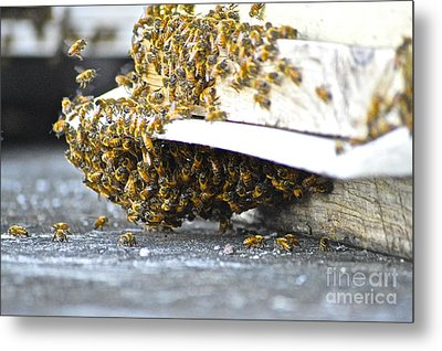 Busy Bees Metal Print by Laura Forde