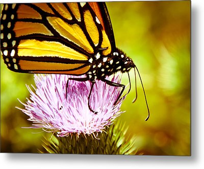 Metal Print featuring the photograph Busy Butterfly by Cheryl Baxter