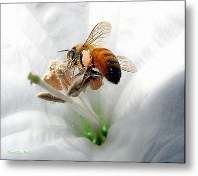 Busy Metal Print by Joyce Dickens